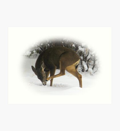 Deer With An Itch Art Print