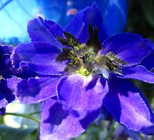 Delphinium by jsmusic