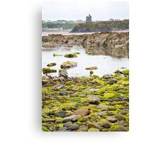 ballybunion castle kelp covered rocks Canvas Print