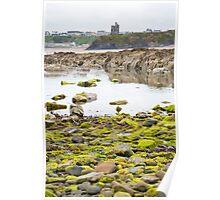 ballybunion castle kelp covered rocks Poster