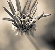 Garden variety monochrome by alan shapiro