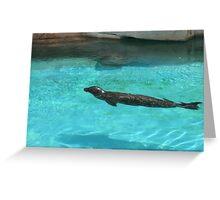Seal Greeting Card