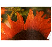 Sunflower and Texture Poster