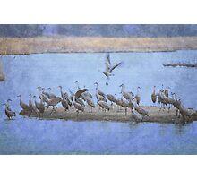 Crane Island Photographic Print