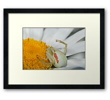 More flys with honey Framed Print