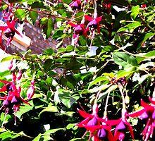 Yard Flowers by Heather Allan