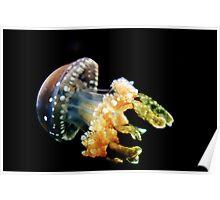 Lagoon Jellyfish Poster