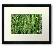 Green plants Framed Print