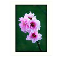 Pinky Blooms Art Print