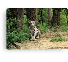 Model Tiger Canvas Print