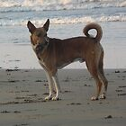 tiger... d best beach dog everrrrrr by rainbowvortex