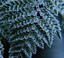 Crystalline Frosted Fern by Emma Stone