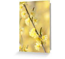 Acacia flexifolia Greeting Card
