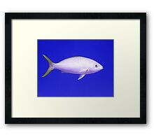 Yellow Tailed Snapper From Side Framed Print