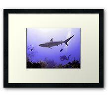 Swimming Shark Framed Print