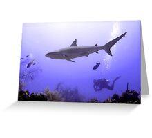 Swimming Shark Greeting Card
