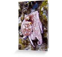 Octopus on the Rocks Greeting Card