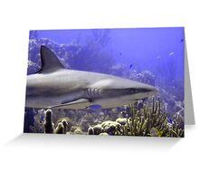 Shark Swimming Past Greeting Card