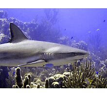 Shark Swimming Past Photographic Print