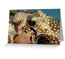 Puffer Fish Being Cleaned Greeting Card