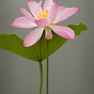 Lotus with Leaf by adygarden