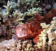 Red Scorpian Fish With Mouth Open by SerenaB