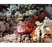 Red Scorpian Fish With Mouth Open Photographic Print