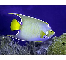 Queen Angelfish From Side Photographic Print