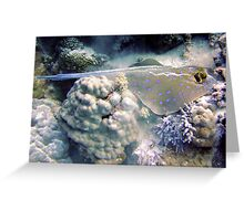 Blue Spotted Ray Feeding Greeting Card