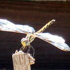 Dragonfly by Jenny1611