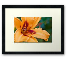 Lily of the Day Framed Print