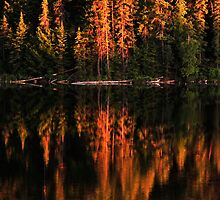 Brewer Lake Evening Light by Joanne  Bradley
