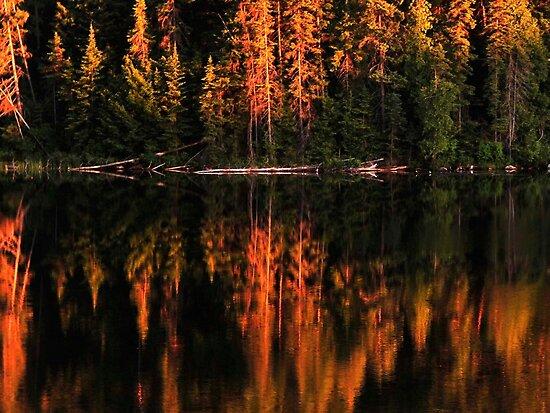 Brewer Lake Evening Light by Joanne  Bradley