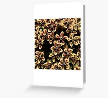 Butterfly weed Greeting Card