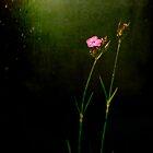 Seeking light by Silvia Ganora