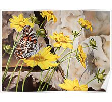 """Painted Lady"" - The American Painted Lady Butterfly Poster"
