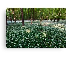 Ramsons Forest Canvas Print