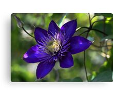 Clematis - Multi Blue Canvas Print
