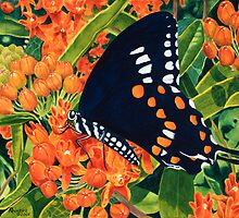 """Swallowtail on Butterfly Weed"" - Wild Butterfly Weed by Rainelle  Meridith"