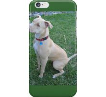 Cool American Staffordshire Bull Terrier iPhone Case/Skin