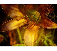 Digital Abstract Lily Photographic Print