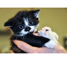 Do You See What I Have To Put Up With < says the kitten Photographic Print