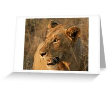 Wary Lioness - Kruger National Park Greeting Card