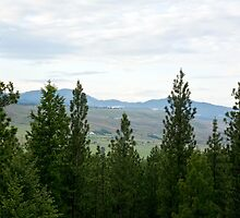 View From the Deck by Bryan D. Spellman