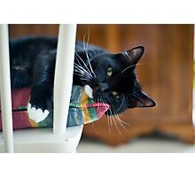 Camillo On My Chair Photographic Print
