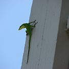Anolis Carolinensis Lizard-Tropical Lizards  in TN by JeffeeArt4u