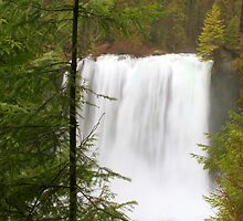 Koosah Falls-Oregon, USA by aussiedi