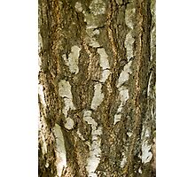 Bark (abstract) Photographic Print