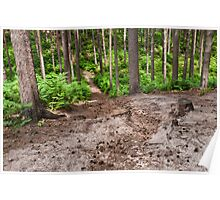 Woods near Woburn Sands Poster