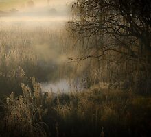 Bush and Reeds  by David  Preston
